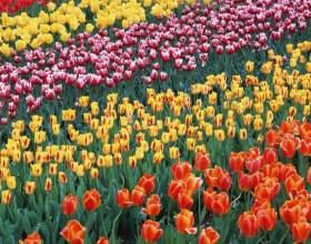 Как прошел фестиваль цветов в челси фото