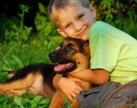 Как проверить, есть ли аллергия на собачью шерсть фото