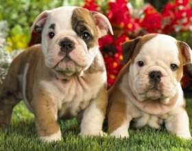 Как проверить грыжу у новорожденного щенка фото