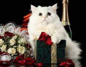 Как провести армянскую свадьбу фото