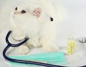 Как проводят стерилизацию кошки фото