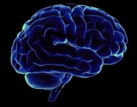 Как работает мозг человека фото