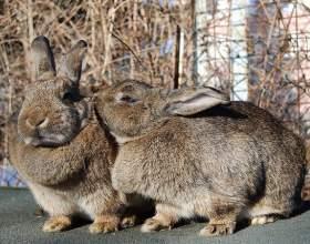Как распознать кроликов фото