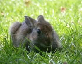 Как распознать пол кролика фото