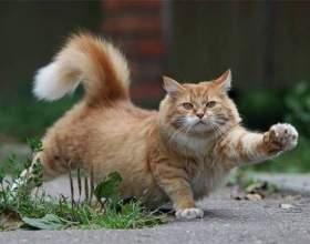 Как отучить кота метить территорию фото