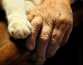 Как рассчитать соотношение возраста кошки с человеческим фото