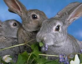 Как растить кроликов фото