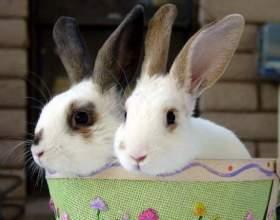 Как лечить насморк у кролика фото