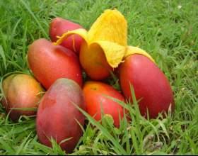 Как разделывать манго фото