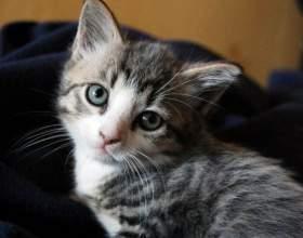 Как различить, кот или кошка фото