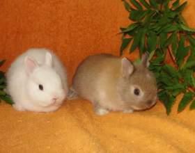 Как различить пол у кроликов фото