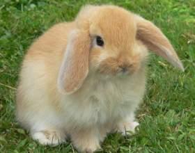 Как определить пол у кролика фото