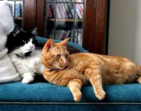 Как развязать кота фото