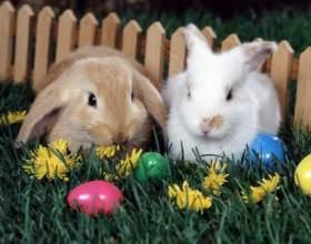 Как выкормить кроликов фото