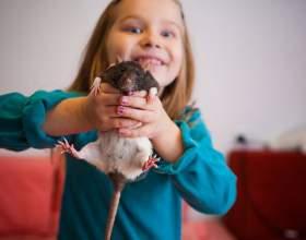 Как играть с крысой фото