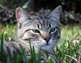 Когда кастрировать кота фото