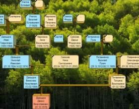 Как рисовать генеалогическое древо фото