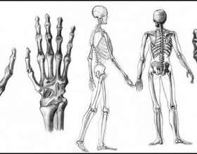 Как рисовать скелет человека фото