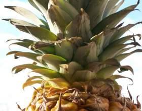 Как сажать ананас фото