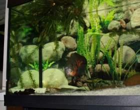 Как сделать аквариумное хозяйство фото