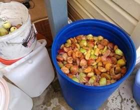 Как сделать брагу из яблок фото