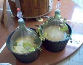Как сделать брагу из винограда фото