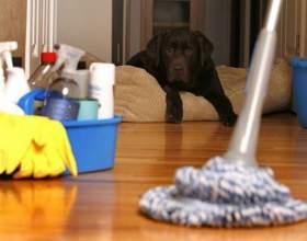 Как сделать дом чистым фото