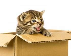 Как сделать дом для кота фото