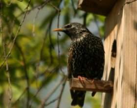 Как сделать домик для птиц фото