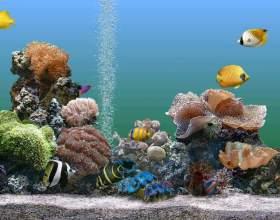 Как сделать сифон для аквариума фото