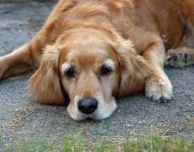 Как сделать собаке будку фото