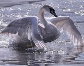 Как сделать костюм лебедя фото