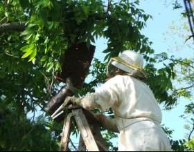 Как сделать ловушки для пчёл фото