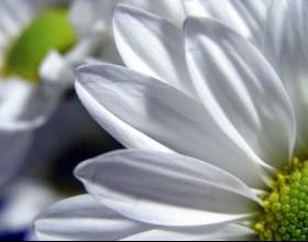 Как сделать пластиковые цветы фото