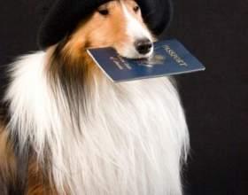 Как сделать родословную щенкам фото