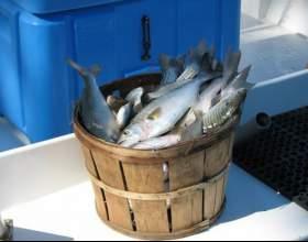 Как сделать рыбный фарш фото