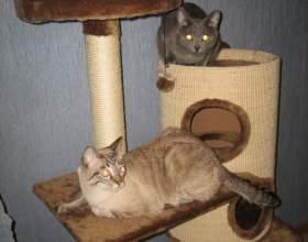 Как сделать кошке домик фото