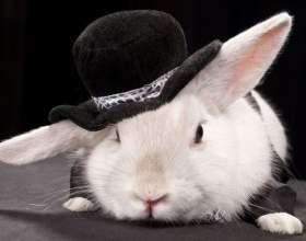 Как сделать ушки зайца фото