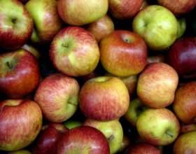Как сделать вино из яблок фото