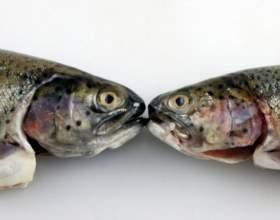 Как снять шкуру с рыбы фото
