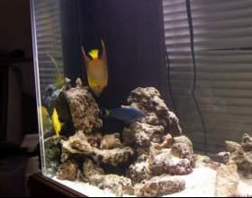 Как выбрать фильтр для аквариума фото