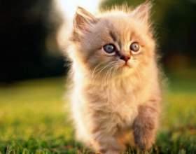 Как содержать котенка в квартире, чтобы не было запаха фото