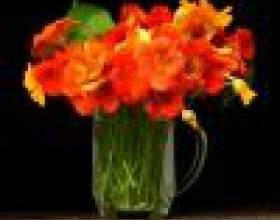 Как сохранить цветы свежими фото