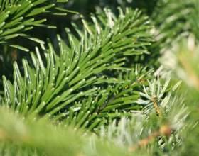 Как сохранить елку свежей фото