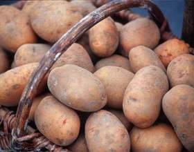 Как сохранить картошку фото