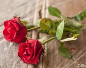Как сохранить лепестки роз фото
