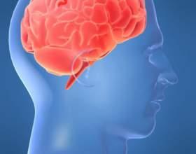 Как сохранить мозг здоровым фото