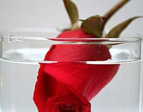 Как сохранить розу в воде фото