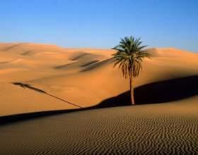 Как спастись в пустыне фото