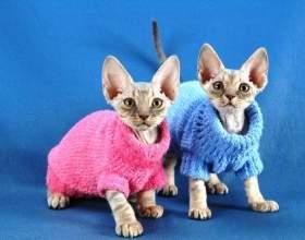 Как сделать костюм для кошки своими руками фото